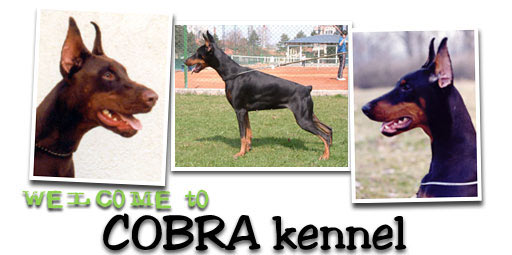 Welcome to Cobra kennel